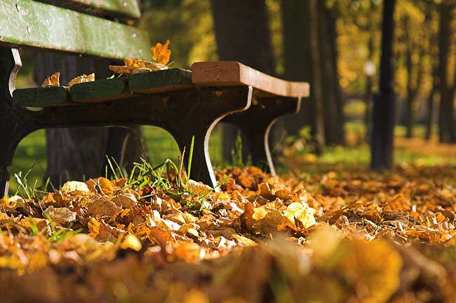 Bench with leaves | Bank mit Herbstlaub